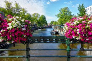 נהר אמסטרדם ופריחה